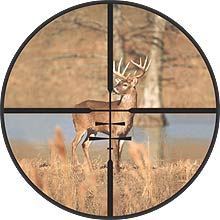 Buck in Crosshairs